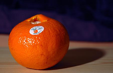 gaypak_orange.jpg