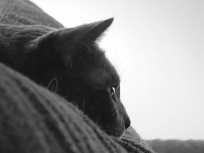 kitty *scritch*