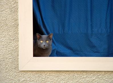neighbour_cat.jpg