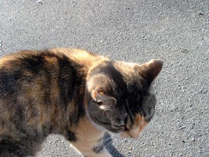 neighbour_cat1.jpg