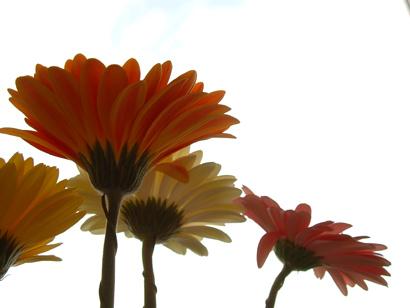 sandy_flowers1.jpg