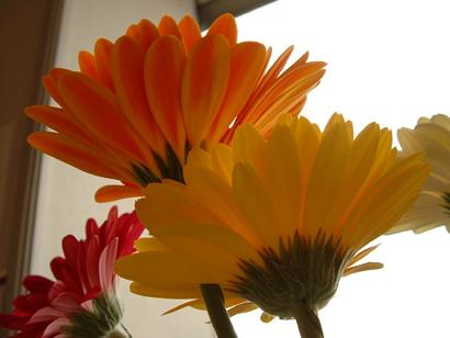 sandy_flowers2.jpg