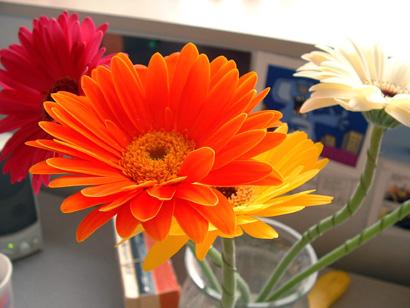 sandy_flowers3.jpg