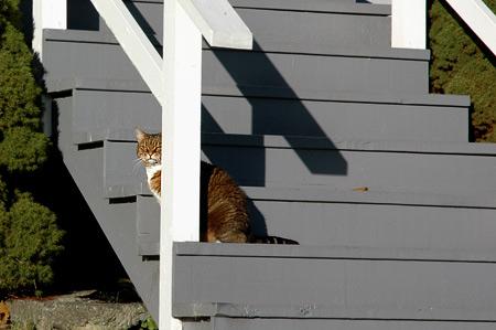 stair_cat.jpg
