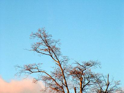 treeandcloud.jpg