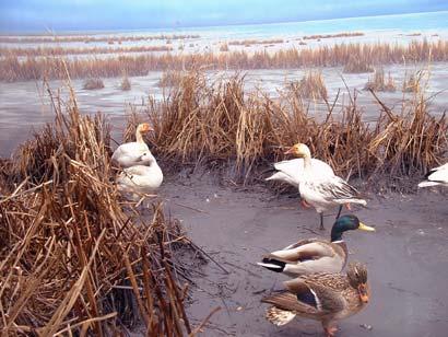 water_birds.jpg